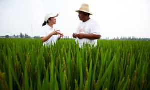 In order to feed a population of nine billion, it is estimated that global food production will need to increase by 70%.